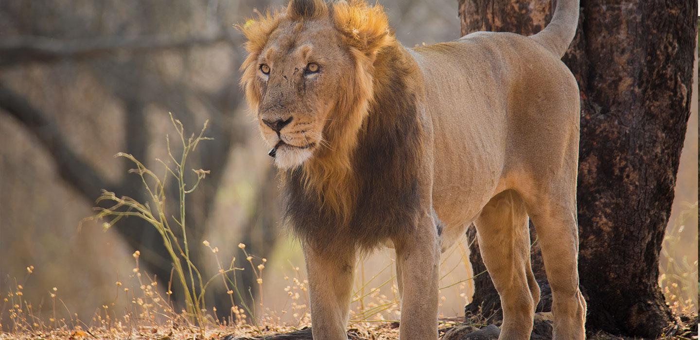 Gir Safari Discover